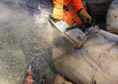 Stump-cutting1-1024x685